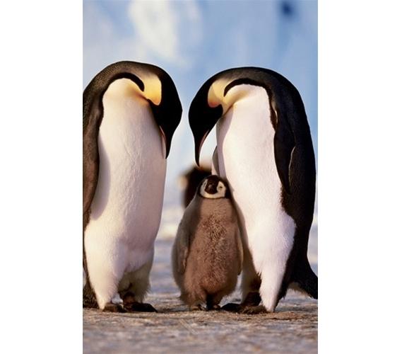 Penguin Family Poster Cute Animal Inspired Poster For