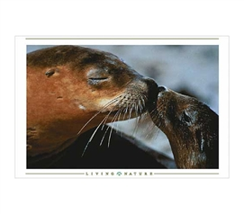Cute Poster For College Students - Seals Kissing Poster - Decorate Your Dorm
