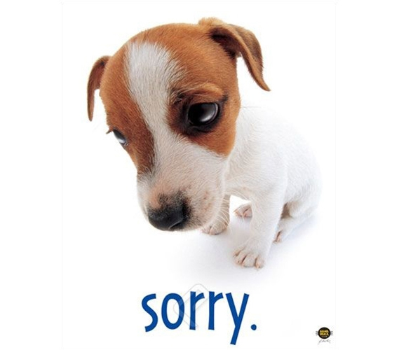 Quot Sorry Quot Dog Cute College Dorm Room Poster College Room