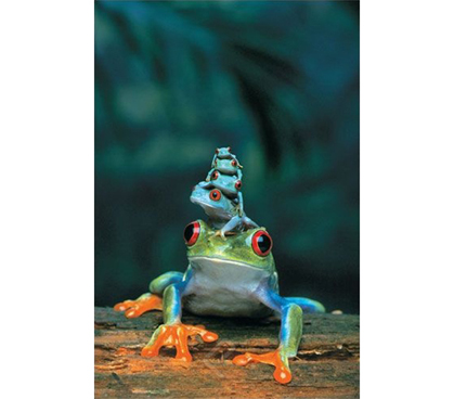Red Eyed Tree Frog Mother And Babies Poster 4 Baby Tree
